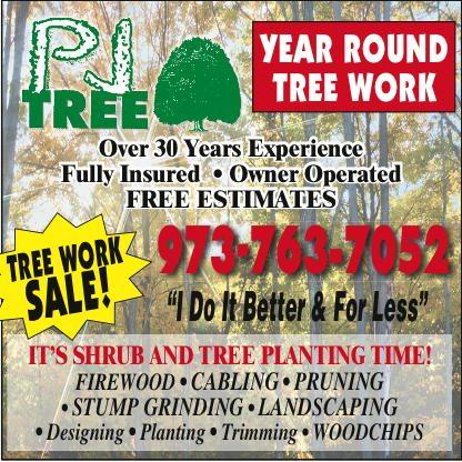 PJ Trees.indd
