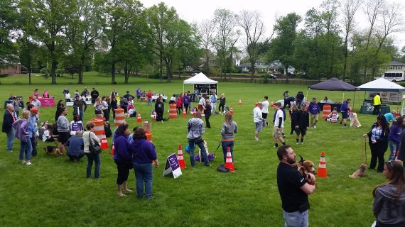 Bark For Life Contributes To Cancer Cures For Furry Friends