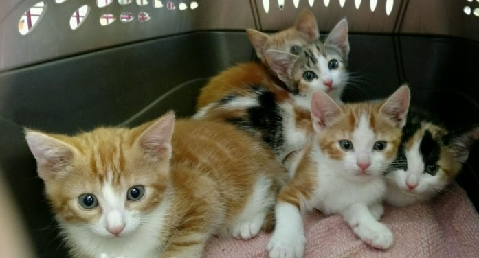 Special Kitten Adoption At Randolph Animal Shelter This Saturday
