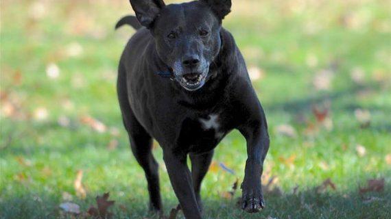 Meet A Black Dog Names Zeus