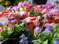 County College Of Morris Hosts Annual Spring Plant Sale