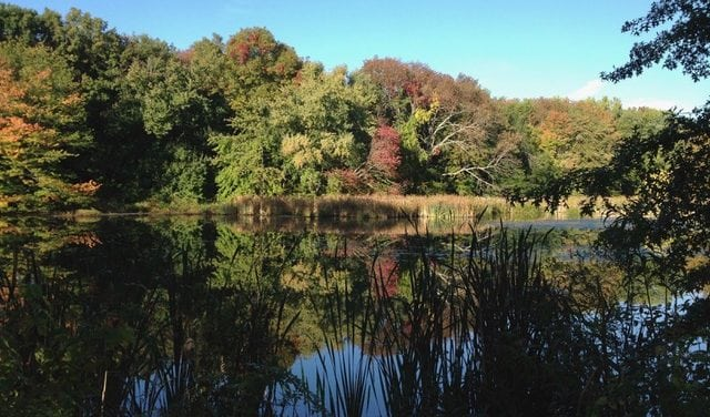 Morristown And Morris Township Library Holds Friends Of Foote's Pond Wood Exhibit