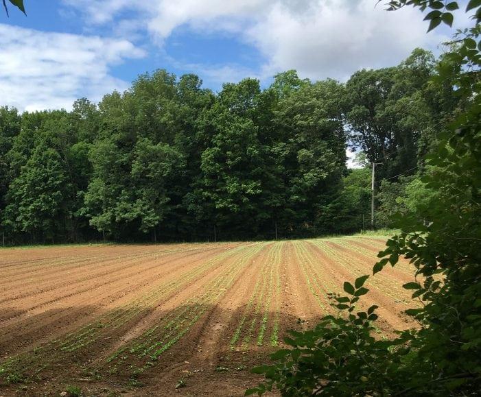 Morris County Preserves Chester's Cogger Farm