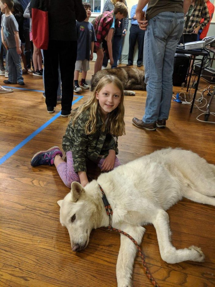 """""""Live Wolves!"""" at the Mendham Township Library"""