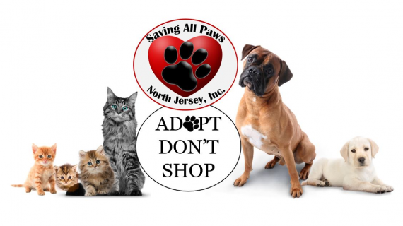 Adopt, Don't Shop: Saving All Paws in Kinnelon