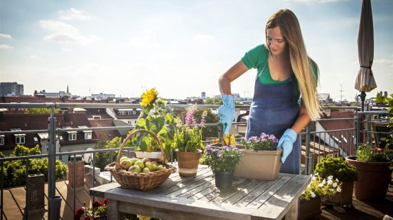 Dig into gardening trends: Tips to get started
