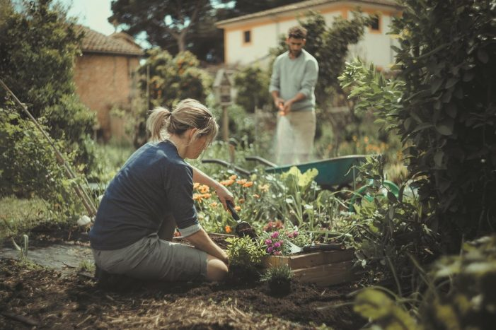 4 tips: Zing up your menus with a tasty summer garnish garden