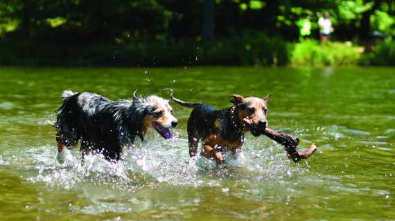 5 Tips to Reduce Your Pet's Environmental Pawprint