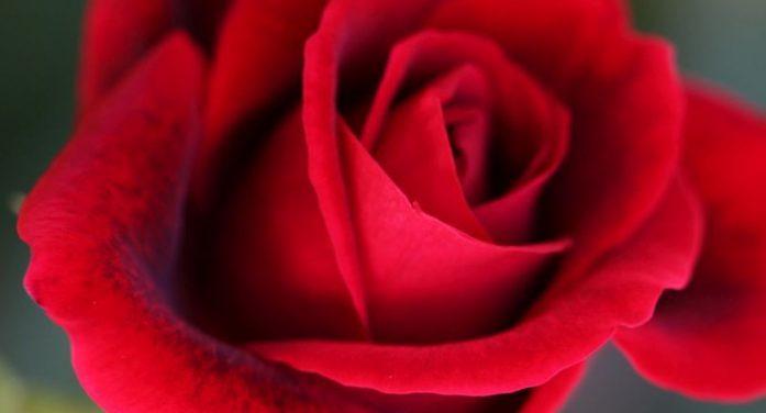 A Valentine's Day Story