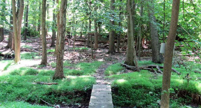 22 ACRES PRESERVED IN VERONA FOR PUBLIC USE